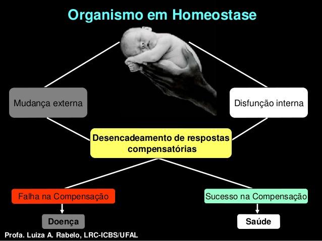 homeostasia aula